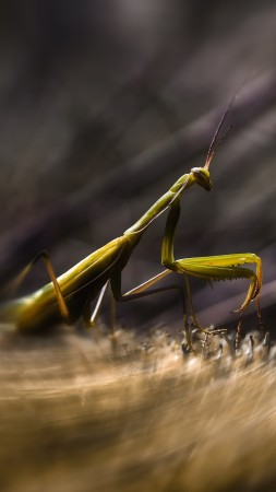 Mantis, insects, macro, motion, green, art, grass (vertical)