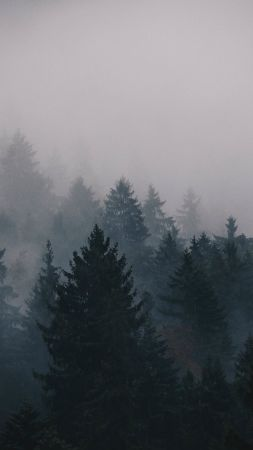 fog, 5k, 4k wallpaper, trees, forest (vertical)