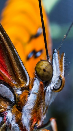 Butterfly, colorful, macro, insects, red, wings, eyes (vertical)