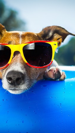 Dog, puppy, duck, glasses, drops, summer, resort, funny, beach, blue (vertical)