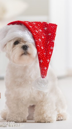 Puppy, Christmas, New Year, fir-tree (vertical)