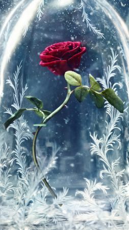 Beauty and the Beast, glass, rose, best movies (vertical)