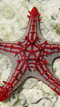 Sea Star, Zanzibar, Africa, diving, tourism, underwater, fish, star fish, sealife, World's best diving sites (vertical)