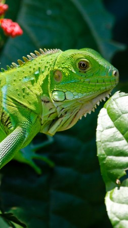 Iguana, reptiles, green, aimal, flowers, eyes, leaves, dragon, nature (vertical)