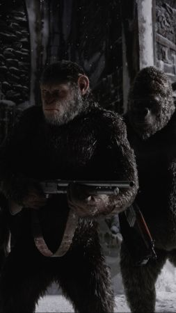War for the Planet of the Apes, 4k, gorilla, snow (vertical)