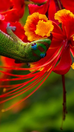 Lizard Hilo, Hawaii, lizard, green, flowers, red, nature, animal, reptiles (vertical)
