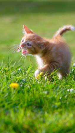 kitten, cat, cute, 4k (vertical)