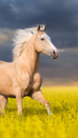Horse, cute animals, 5k (vertical)