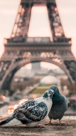 love image, doves, 4k, paris (vertical)