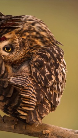 National Geographic, 4k, HD wallpaper, Owl, Funny (vertical)