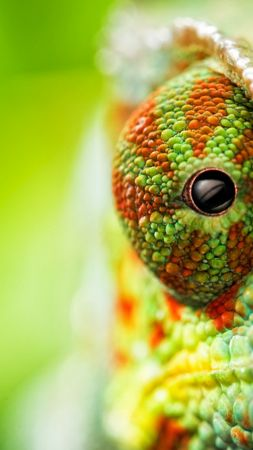 chameleon, eyes, 4k (vertical)