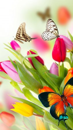 butterfly, flowers, tulips, 4k (vertical)
