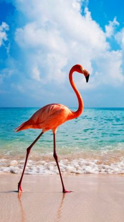 flamingo, bird, beach, ocean, 4k (vertical)