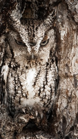 National Geographic, 4k, HD wallpaper, Owl, Hidden, Tree, Masking, Funny (vertical)