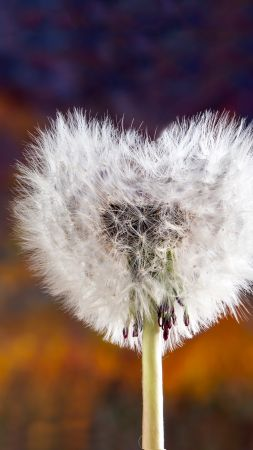 love image, heart, dandelion, 5k (vertical)