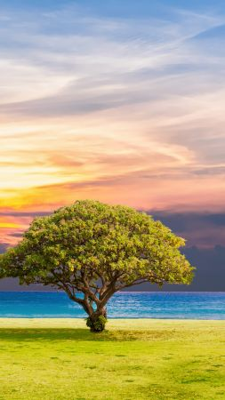tree, nature, ocean, landscape, 5k (vertical)