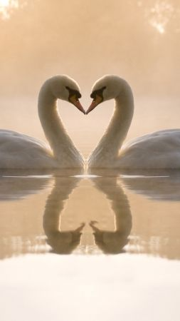 love image, swan, couple, lake, 4k (vertical)