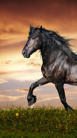 horse, 5k, 4k wallpaper, hooves, mane, galloping, black, sunset, green grass, sky, clouds (vertical)