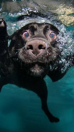 Dog, puppy, black, underwater, funny, animal, pet, water bubbles