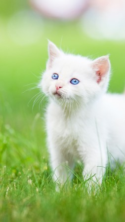kitten, cute animals, grass, 5k (vertical)