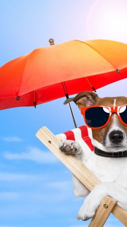 Dog, 5k, 4k wallpaper, 8k, puppy, sun, summer, beach, sunglasses, umbrella, vacation, animal, pet, sky (vertical)