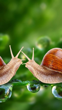Snail, 5k, 4k wallpaper, water drops, green, nature, insects, close (vertical)