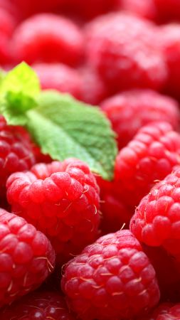 raspberries, delicious, 5k (vertical)