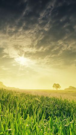 field, nature, sky, grass, 4k (vertical)
