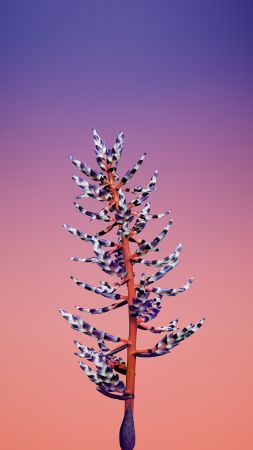 iPhone X wallpapers, iPhone 8, flower, iOS11, retina, 4k, HD, WWDC 2017 (vertical)