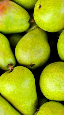 pear, fruit, green, 5k (vertical)