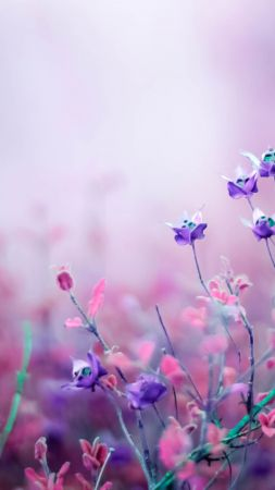 flowers, purple, 4k (vertical)