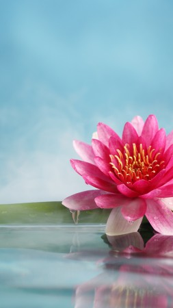 lotus, flower, bamboo, water, 5k (vertical)