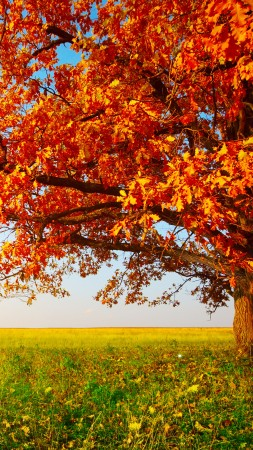 autumn, tree, leaves, field, grass, 8k (vertical)