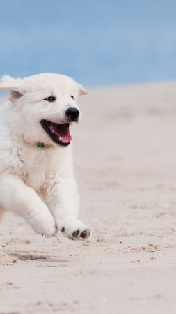 Dog, puppy, white, animal, pet, beach, sand, sea (vertical)