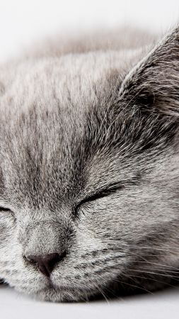 cat, cute, sleep, 5k (vertical)