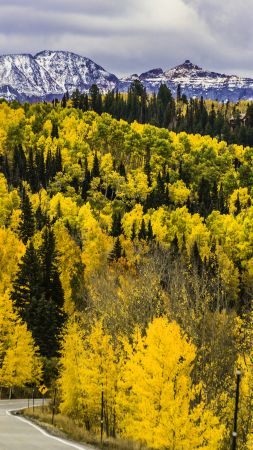 autumn, forest, trees, mountains, road, Colorado, USA, 5k (vertical)