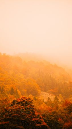 fog, autumn, forest, mountain, 5k (vertical)