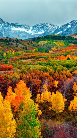 autumn, forest, mountain, 5k (vertical)