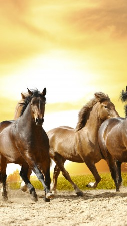 horses, cute animals, 8k (vertical)