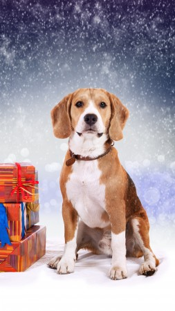 dog, cute animals, Christmas, New Year, 5k (vertical)