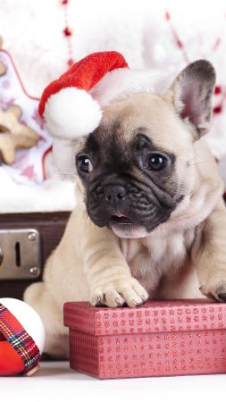 puppy, cute animals, Christmas, New Year, 4k (vertical)