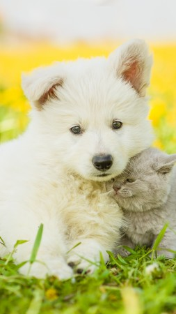 puppy, kitten, funny animals, 4k (vertical)