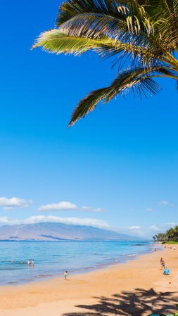 Maui, Hawaii, beach, ocean, coast, palm, sky, 5k (vertical)