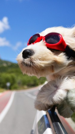 Dog, puppy, road, funny, glasses, hair, sky, nature (vertical)