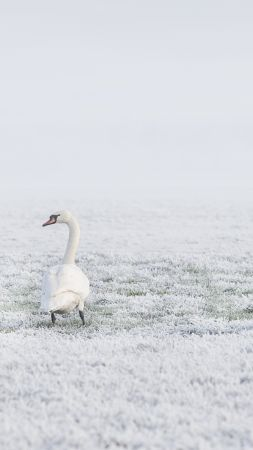 winter, swans, snow, 8k (vertical)