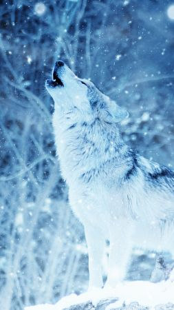 wolf, winter, snow, 4k (vertical)