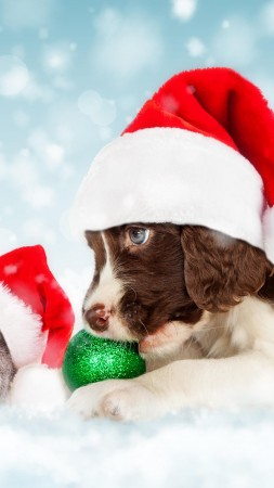 Christmas, New Year, snow, puppy, kitten, cute animals, 5k (vertical)