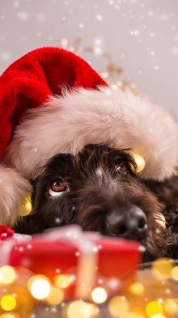 Christmas, New Year, snow, dog, cute animals, 4k (vertical)