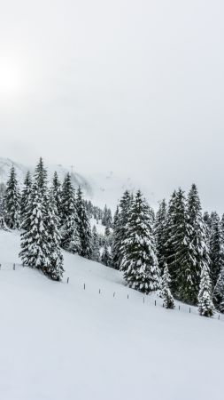forest, tree, snow, winter, 5k (vertical)