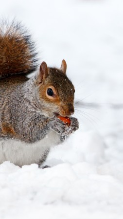 squirrel, cute animals, snow, winter, 4k (vertical)